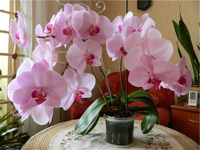 Необычный, простой и рабочий способ размножение орхидеи