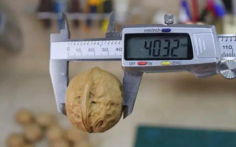 Хитрые европейцы колют орехи по-другому: быстро и ядро остается целехонькое