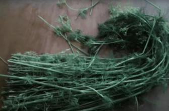 Не выкидывайте стебли укропа. Из них можно сделать кое-что очень вкусное.