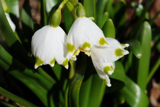 15 потрясающих растений, которые цветут в июне