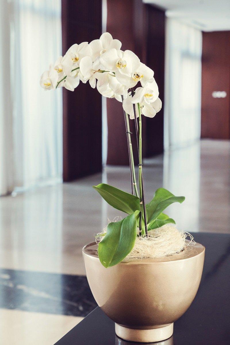 Почему у орхидеи корни растут вверх и как их остановить