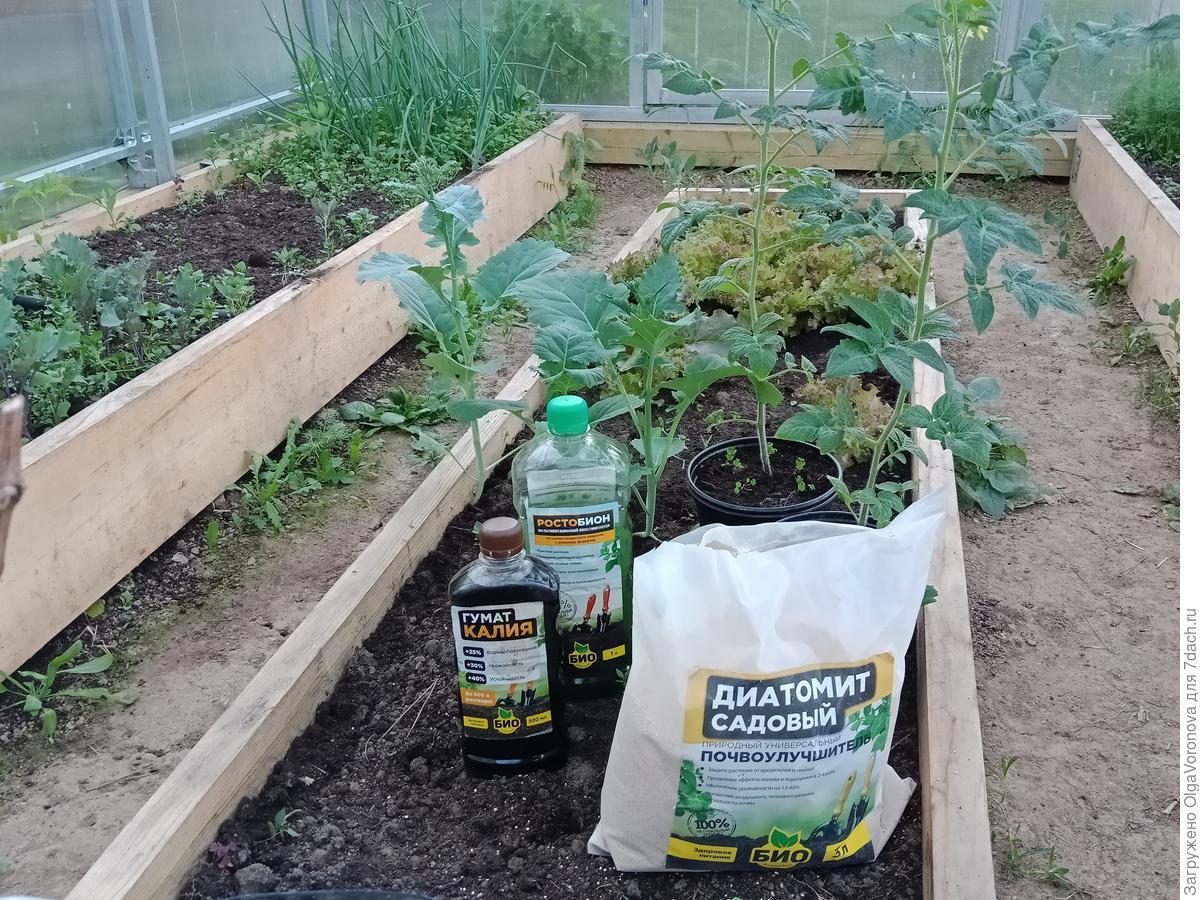 Сажаем томаты в теплицу и открытый грунт: сроки, подготовка почвы и другие нюансы
