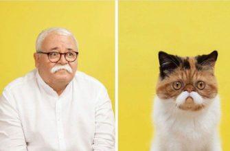 Фотограф показал, как сложно иногда отличить кошку от хозяина: 7 пар, сходство которых поражает