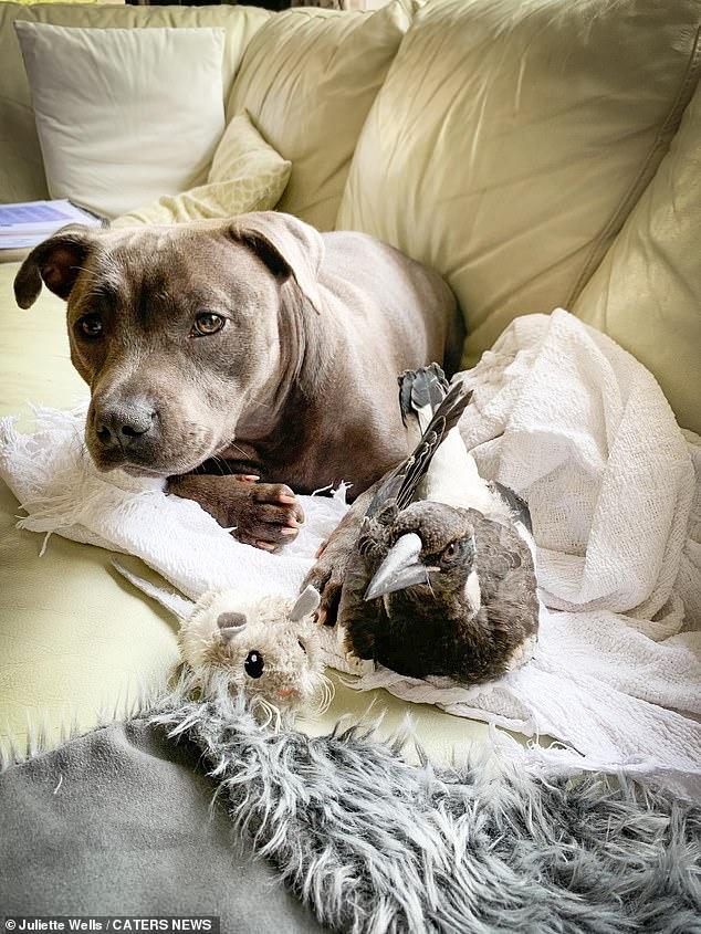 Сорока залаяла как собака, которая стала её лучшим другом