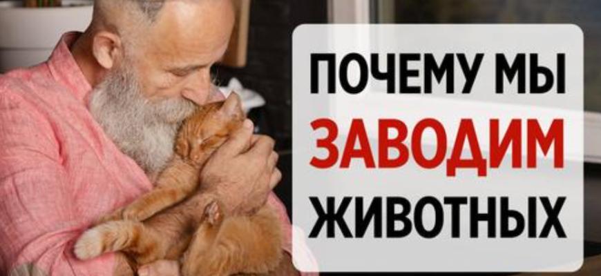 Мнение клинического психолога: какие люди не заводят домашних животных